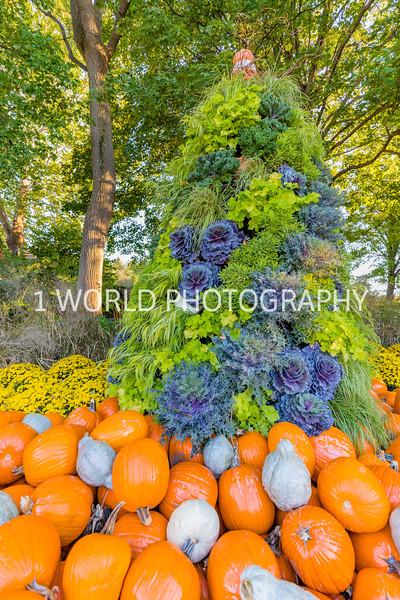 Morton Arboretum Fall 2017-88-18.jpg