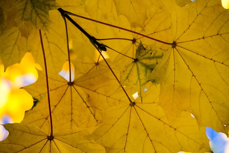 November 20 - Lines and shapes.jpg