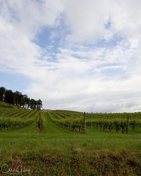 vineyard sky.jpg