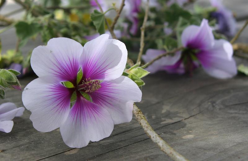 4283 Flowers.jpg