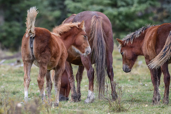 9-29-15 Ab. Wild Horses - Healthy Band