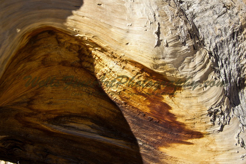 A thousand years of tree rings