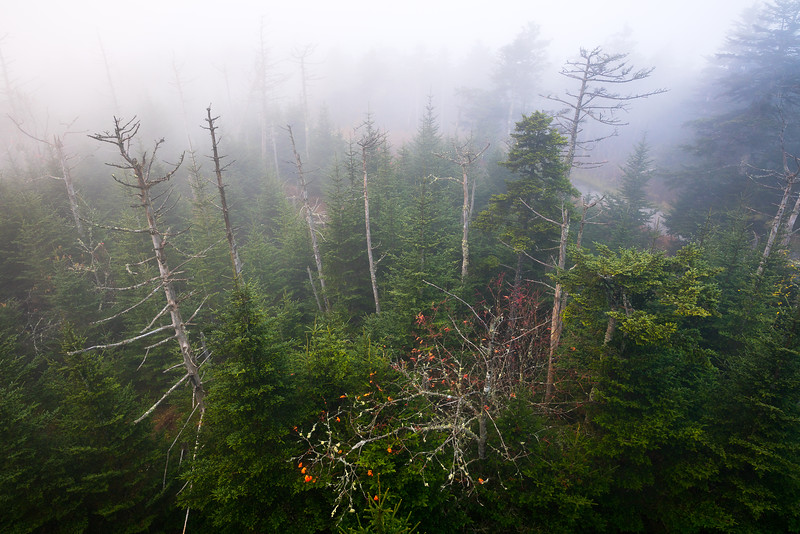 Clingman's Dome, Great Smoky Mountains National Park