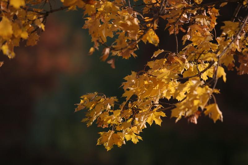 Fall_Images_103008_0083.JPG