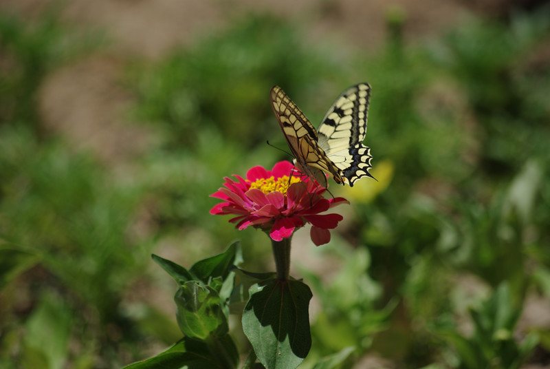 Ogród w Mohanie