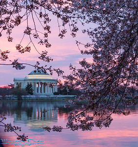 Tidal Basin Cherry Blossom 2017