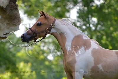 Peggy's colt