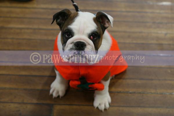 Bulldog Club of CT Puppy Match - 10/28/07