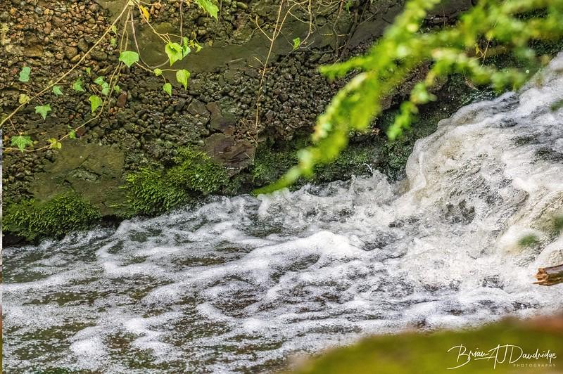 Bedelands Nature Reserve-0831.jpg