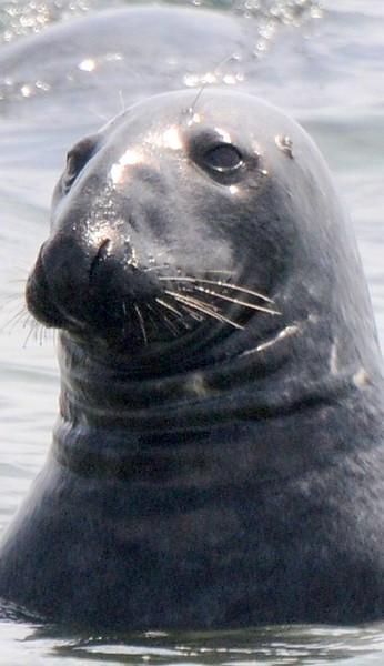 bird,seal,family 069.JPG