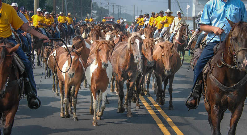 Chincoteague Island Pony Swim Parade #2