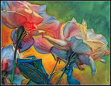 Roses Fantasy