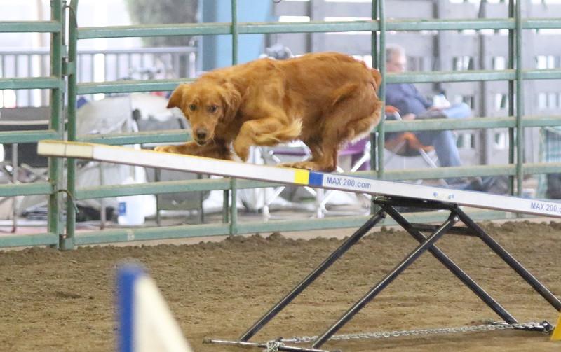 3-15-2015 Bloodhound-9821.jpg