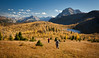 """Autumn at Healy Pass"" X, Banff National Park, Alberta, Canada."