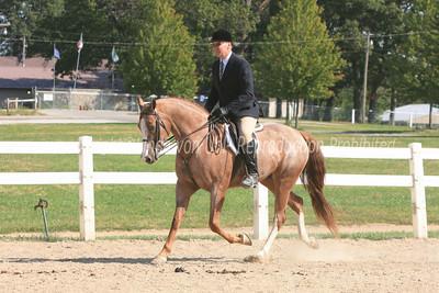 Saturday Sport Horse Under Saddle Classes