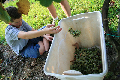 Fall Harvest in NC  - NC WinePress