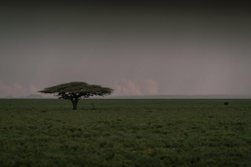 Tanzania_Feb_2018-432.jpg