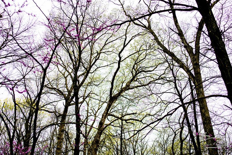 view of canopy in spring _DSC1253.jpg