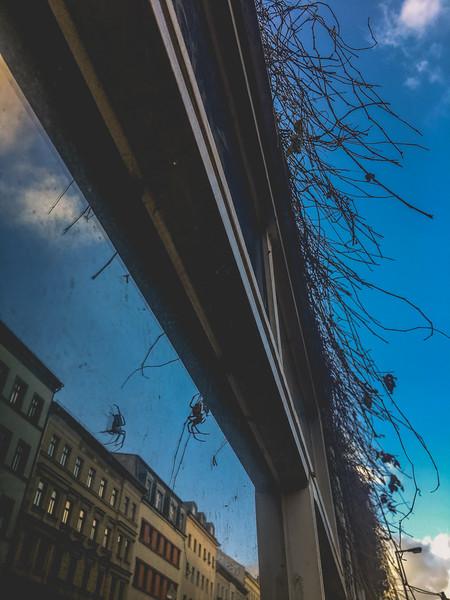 Berlin1Yearand3Months-206.jpg