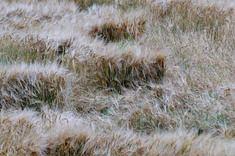 Lindeijer_2012-09-10_183658_01.jpg