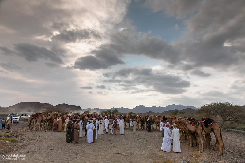 Camel Race  (9).jpg