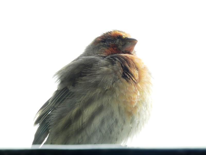 birds (130).JPG