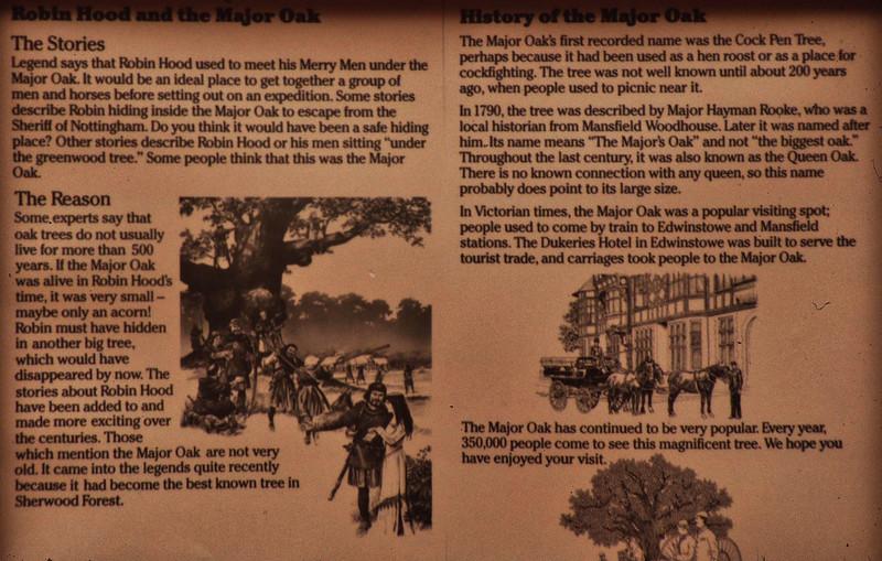 Major Oak - Sherwood Forest 03.jpg