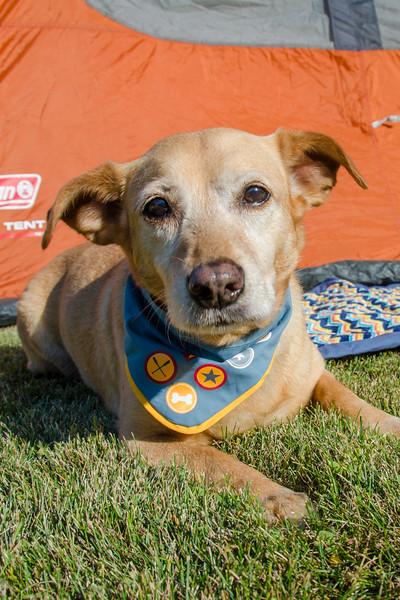 Doggie scout bandana