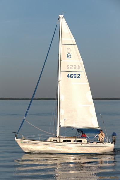 Sailing Beauty