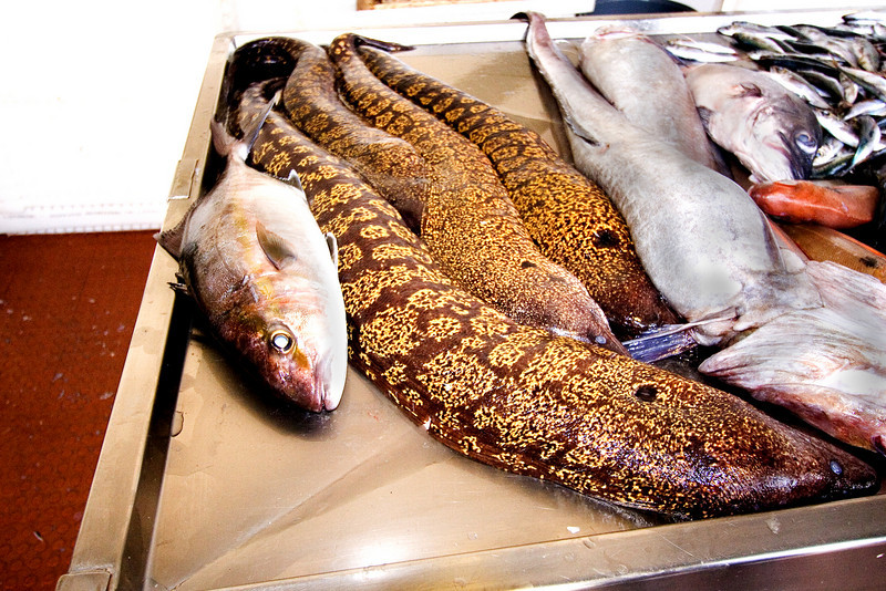 Fish Market Eels.jpg