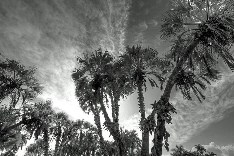 G2 Tropical X (112).jpg
