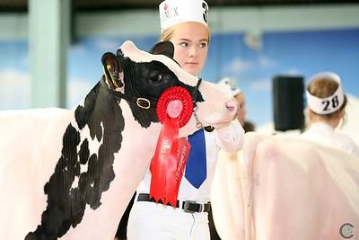 ABAB Holstein Showmanship