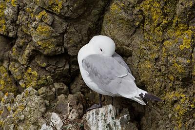 Fugle på Færøerne
