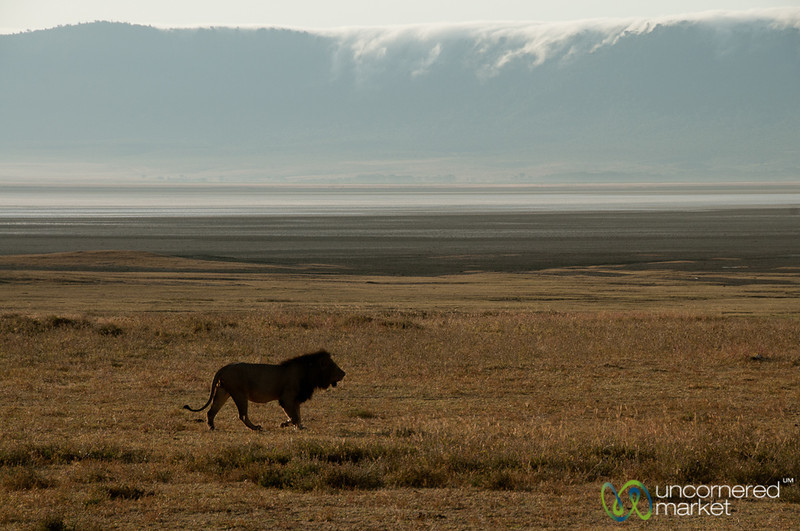 Profile of Male Lion Against Rim - Ngorongoro Crater, Tanzania