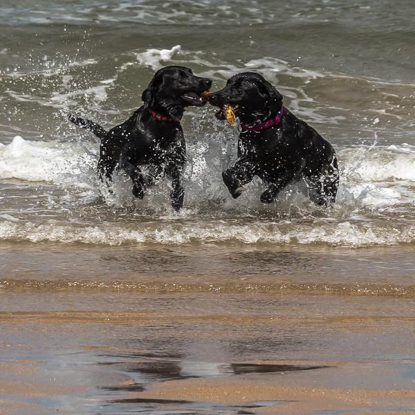Ian Peters-Sea Dogs two.jpg