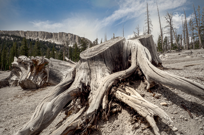August 5 - Mammoth Crest at Horseshoe Lake, Mammoth Lakes, California-1.jpg