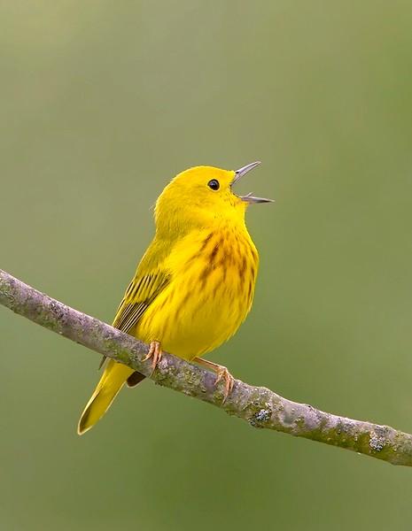 yellow-2-3221 2.jpg