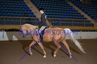 2013 Fall Charity Horse Show Sep 8th AM