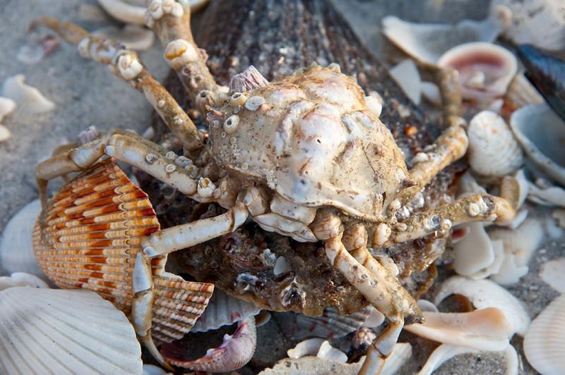 crabbie.jpg