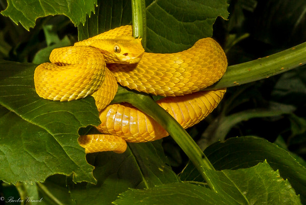 Amphibians-Insects-Snakes