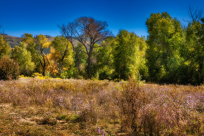 2019 Fall Color - Northern NM
