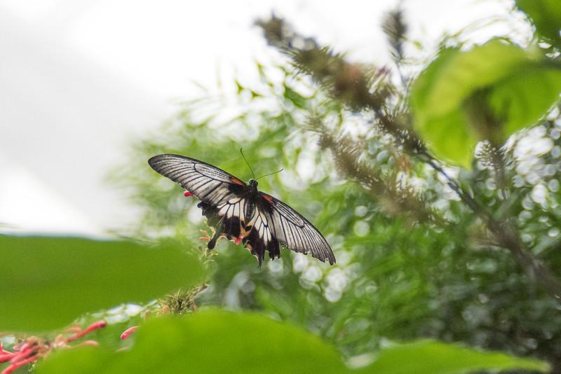 butterfly-97.jpg