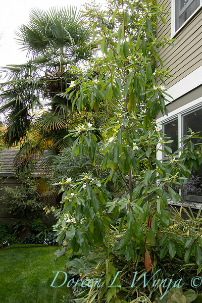 Lisa Bauer - designer's garden_1286.jpg