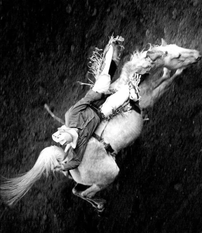 ". "" And Away He Goes \"" - A cowboy holds on for the ride, during the bronc riding contest at the National Western Stock show and rodeo. 1991. Denver Post Library photo archive"