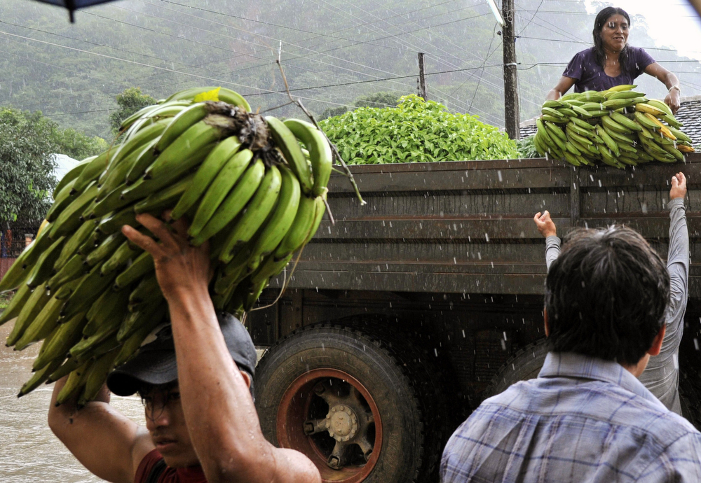 Description of . Natives unload bananas from a truck after the harvested them from a flooded plantation in Puerto Yumani, 15 km from Rurrenabaque, northeast Bolivia, February 4, 2014. (AIZAR RALDES/AFP/Getty Images)
