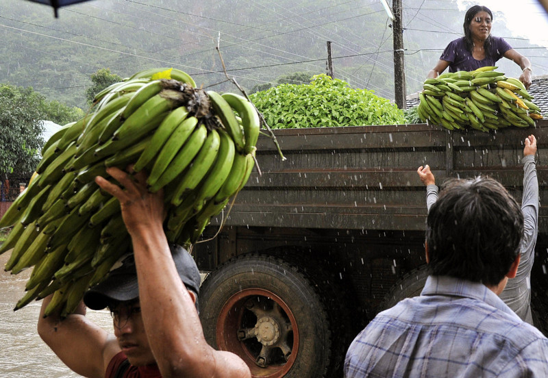 . Natives unload bananas from a truck after the harvested them from a flooded plantation in Puerto Yumani, 15 km from Rurrenabaque, northeast Bolivia, February 4, 2014. (AIZAR RALDES/AFP/Getty Images)