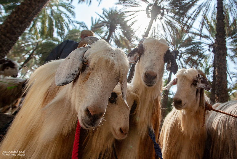 IMG_9932-1-Saroor-Samail- Oman.jpg