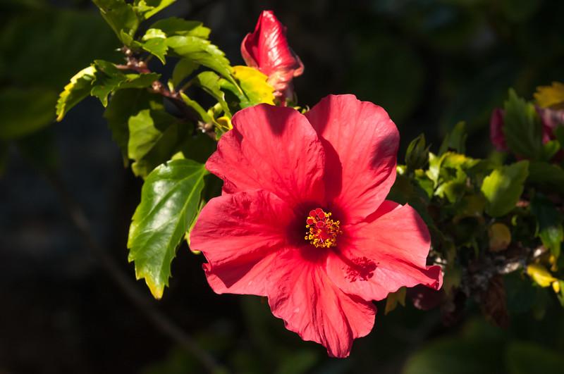 Sea Watch Flower 4