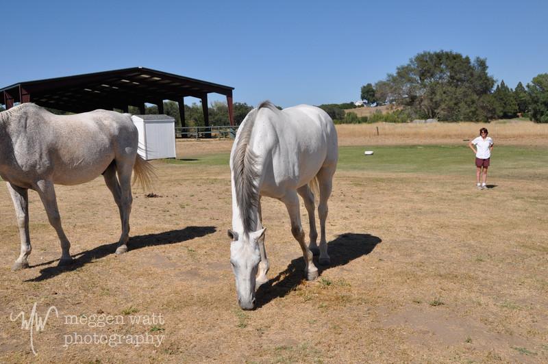 EB&Horses-045.jpg