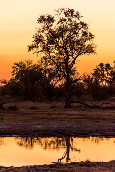 Botswana_June_2017 (210 of 6179).jpg